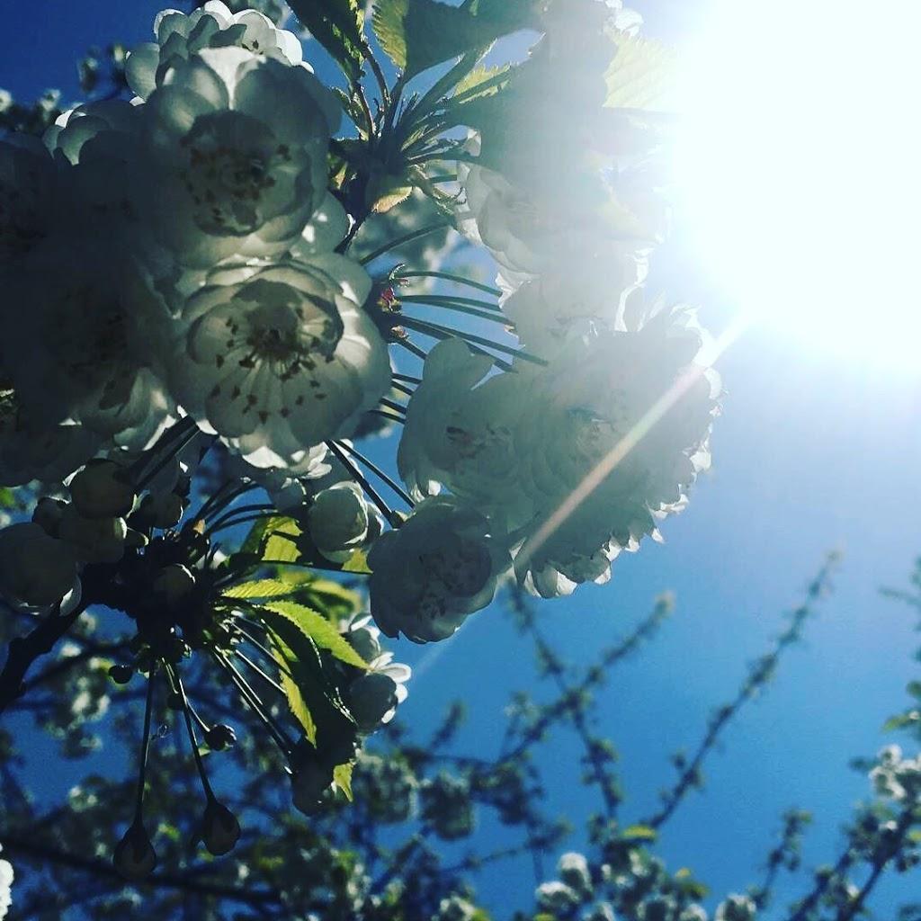 Kochamy cię wiosno za…