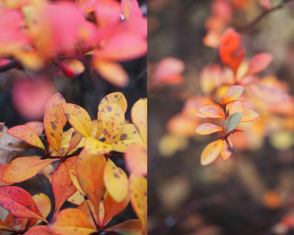Jesienny listopad moimi oczami