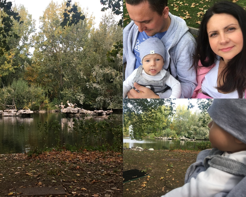 jesień w st james's park