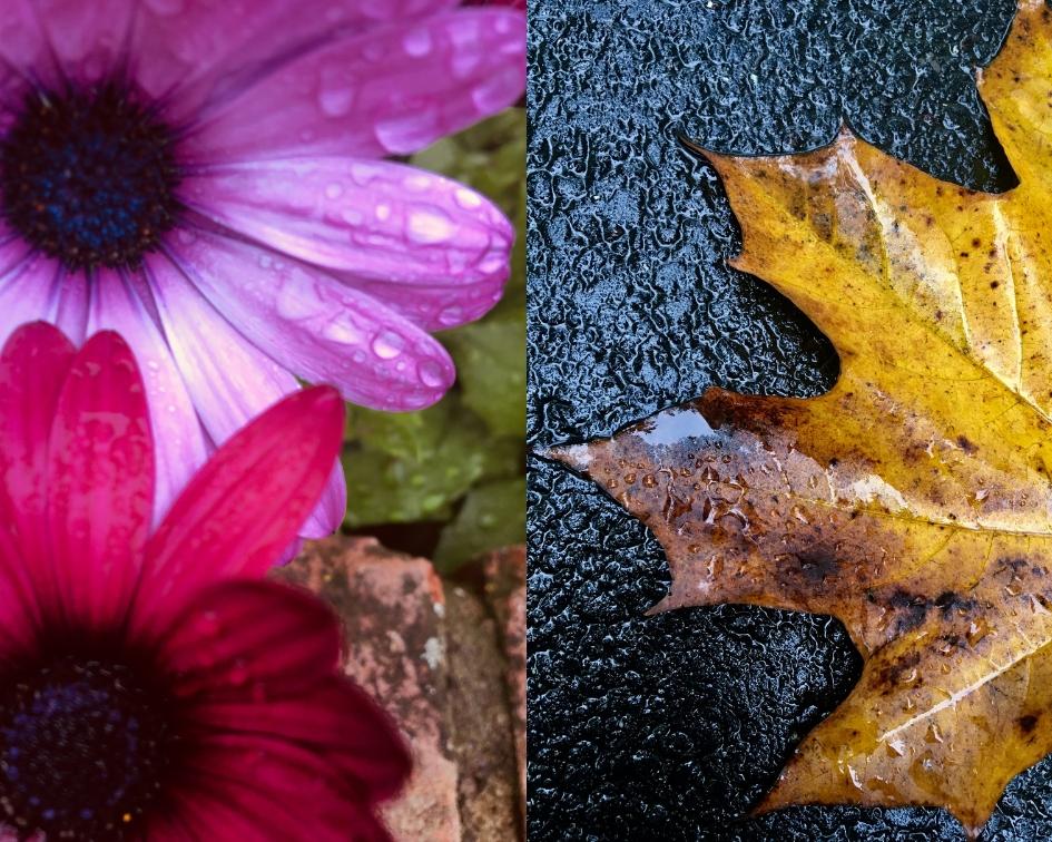 jesienna pogoda, w deszczu