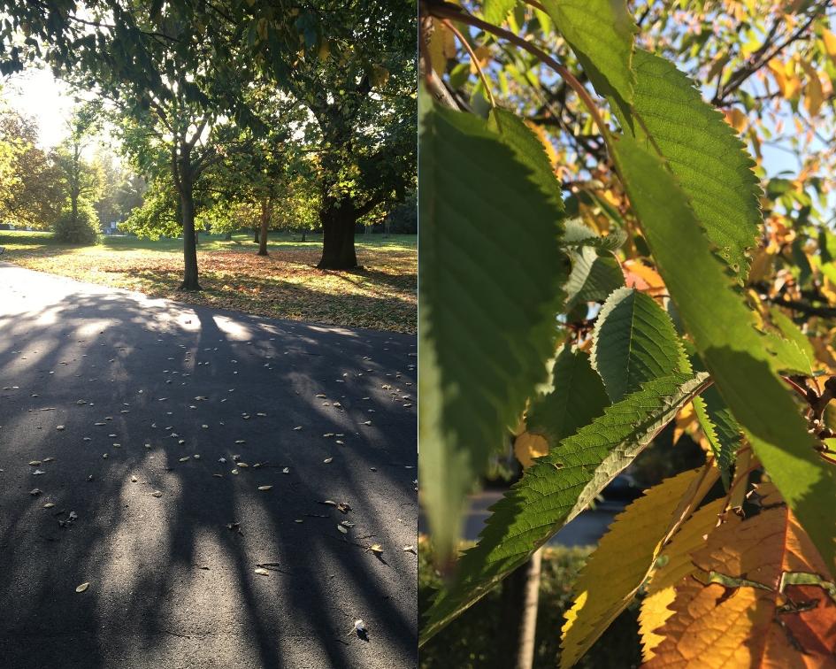 jesienna pogoda, w słońcu
