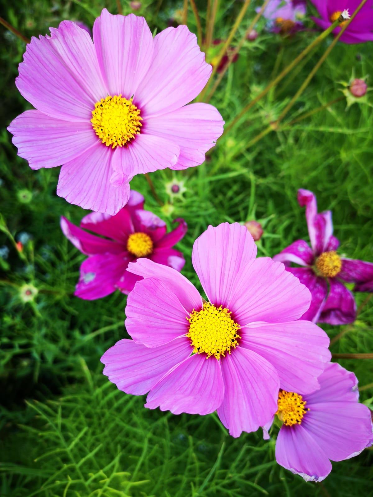 piekne kwiaty