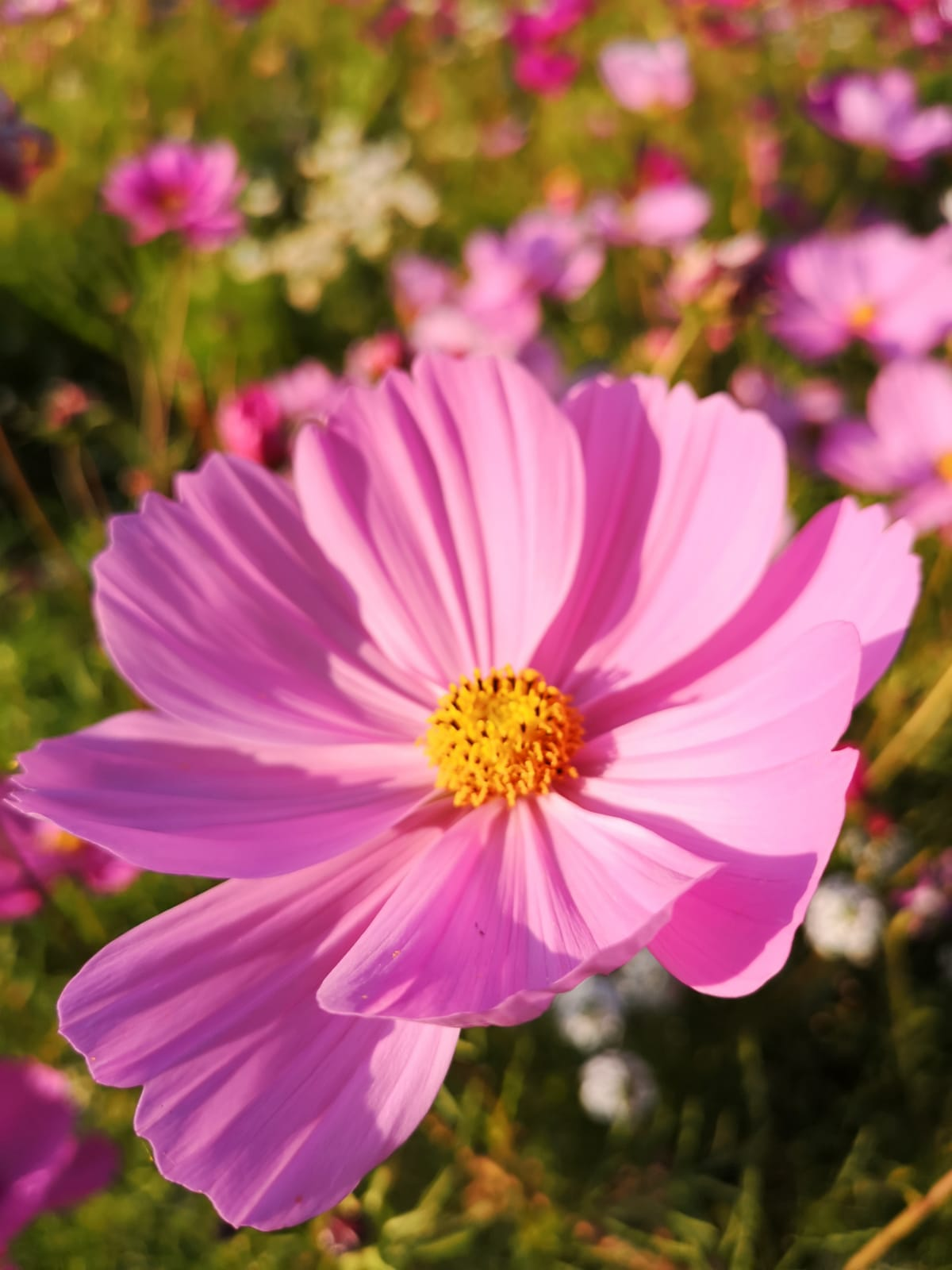 kwiaty w wawozie