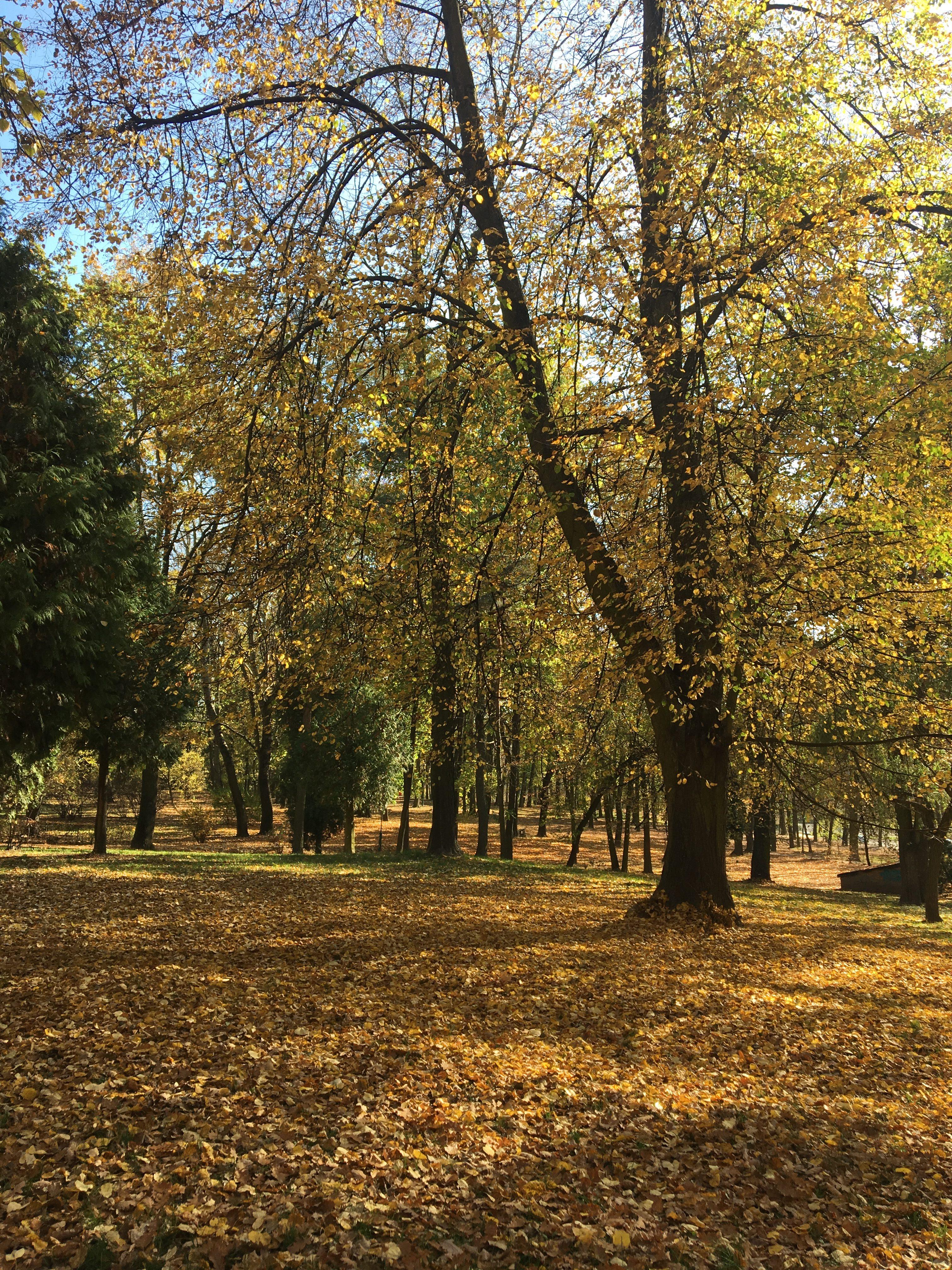 odczarowywanie jesieni w lesie